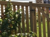 Cedar PIcket Fence With Gate